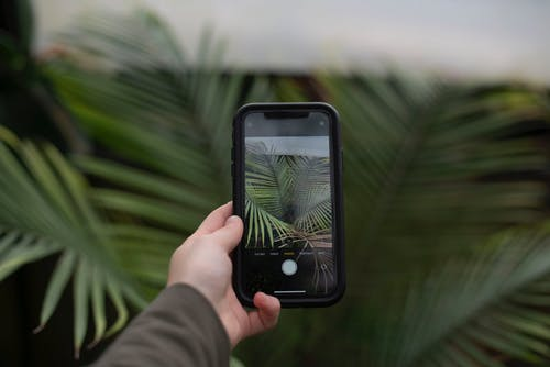 A person taking a picture on their phone of the plants.